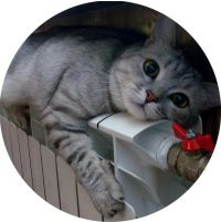 котик греется